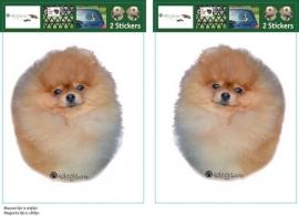 Pomerian / Pomeranian setje 2 stuks OP=OP
