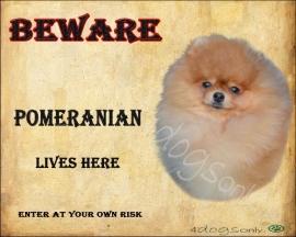 Waakbord Pomerian / Pomeranian (Engels) OP=OP