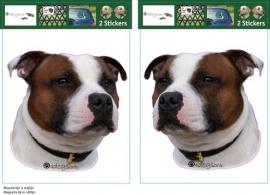 Engelse Staffordshire Bull Terrier Rood Bont setje 2 stuks UITVERKOCHT