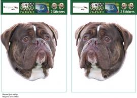 Renascence  Bulldog Gestroomd setje 2 stuks