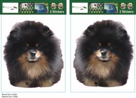 Pomerian / Pomeranian Black and Tan setje 2 stuks OP=OP
