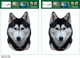 Siberische Husky Zwart setje 2 stuks