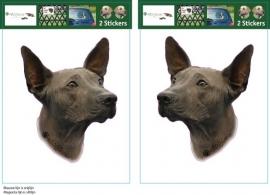 Peruaanse Naakhond setje 2 stuks OP=OP