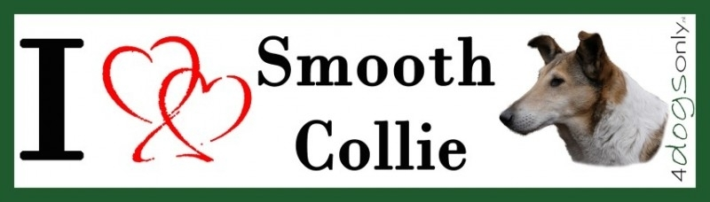 I LOVE Smooth Collie / Kortharige Collie OP=OP