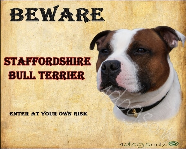 Waakbord English Staffordshire Bull Terrier Bont Rood (Engels) OP=OP