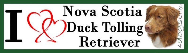 I LOVE  Nova Scotia Duck Tolling Retriever 2 OP=OP