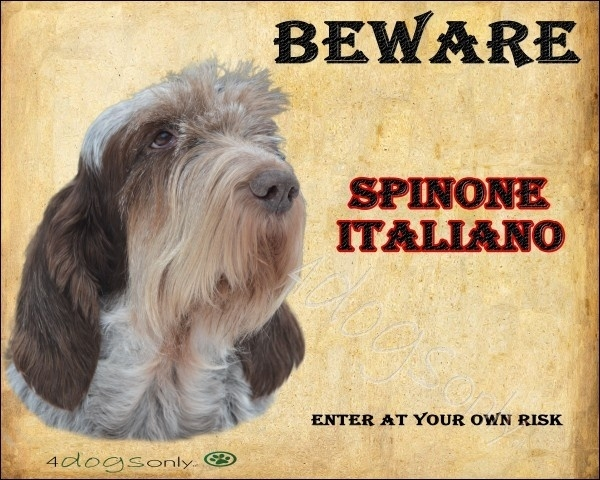 Waakbord Spinone Italiano Bruin Gemeleerd(Engels) OP=OP