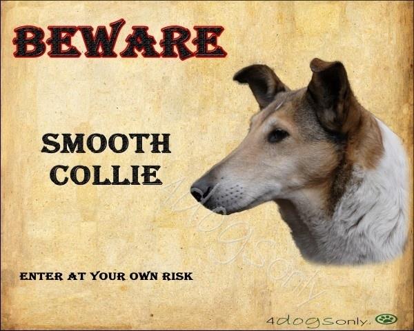 Waakbord Collie Korthaar / Smooth Collie (Engels). Per set van 2 waakborden OP=OP