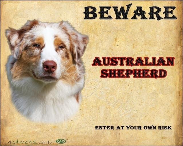 Waakbord  Australian Shepherd Red Merle (Engels) nr 02. Per set van 2 waakborden UITVERKOCHT