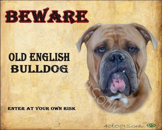 Waakbord Old English Bulldog Fawn (Engels).  OP=OP