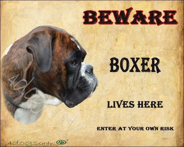Waakbord Boxer Gestroomd (UITVERKOCHT)