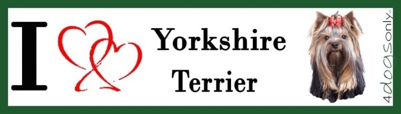 I LOVE yorkshire terrier OP=OP