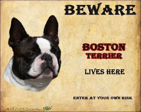 Waakbord Boston Terrier (Engels). OP=OP