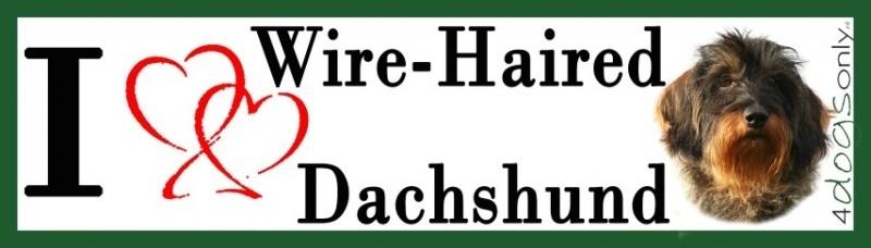I LOVE Wire-Haired Dachshund / Ruw Harige Teckel OP=OP