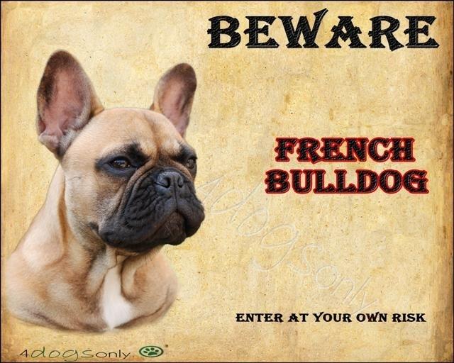Waakbord Franse Bull Fawn (Engels). OP=OP