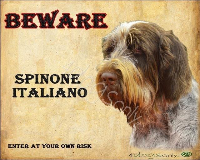 Waakbord Spinone Italiano (Engels). OP=OP