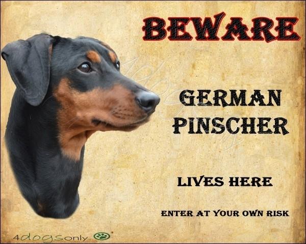 Waakbord German Pinscher Black and Tan / Duitse Pinscher.  OP=OP