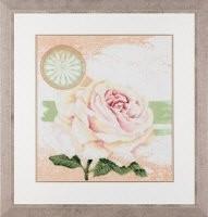 34924 - White roses