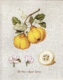 Luca-S - The Pear shaped Quince (LS-BA22430)