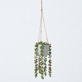 erwtenplant in een hangende pot