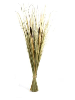 Beargrass hogla bruin