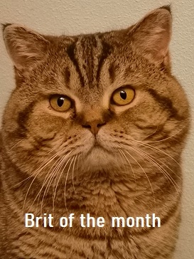 Brit of the month