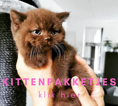 Kittenpakketjes