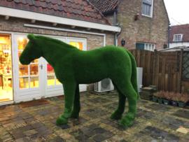 Gras paard