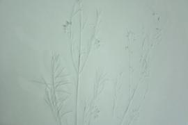 Plantenbord XL - Groen 04