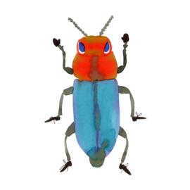 Orange turquoise Beetle