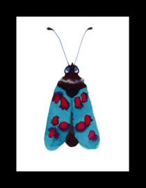 blue red moth