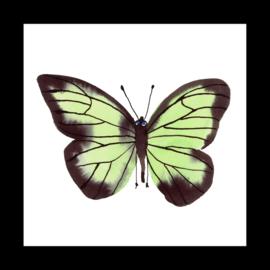Groene vlinder in boxlijst