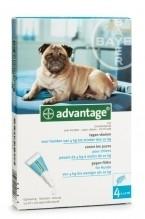 Vlooienmiddel hond Advantage 100 voor honden tussen de 4-10 kg, 4 pipetten voor op de huid, uitstekende werking tegen vlooien