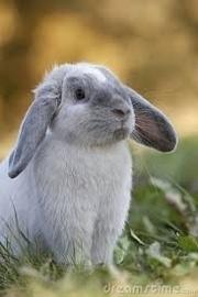 TROVET RABBITVOER 10 kg volledig gezondheidsvoer voor jonge en volwassen koijnen