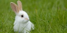 TROVET RABBITVOER 275 gr. volledig gezondheidsvoer voor jonge en volwassen koijnen