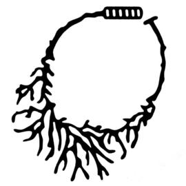 Corail Ketting