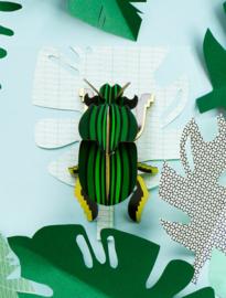 beetle scarab beetle
