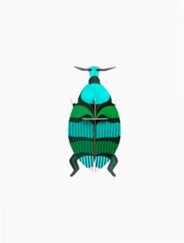 beetle Weevil beetle