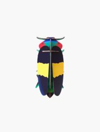 beetle - jewel beetle
