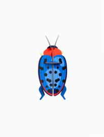 beetle fungus beetle