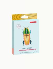 beetle - madagascar beetle