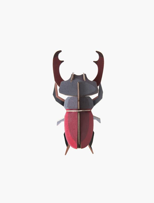 beetle stag beetle
