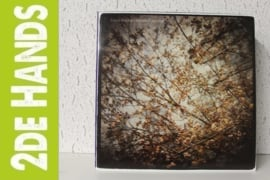 Horse Feathers ‎– Thistled Spring (LP) B10