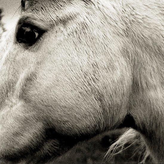 Bonny Light Horseman - Bonny Light Horseman (LP)