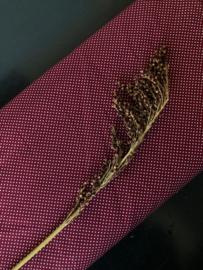 Poplin Bordeaux stip