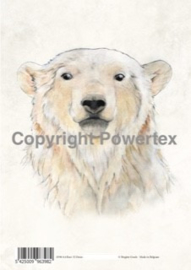 A4 Powerprint paper Bear colour