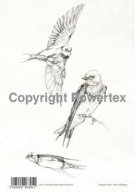 A4 Powerprint paper Swallows