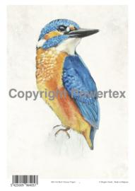 A4 Powerprint paper Bird Colour