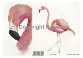 A4 Powerprint paper Flamingo