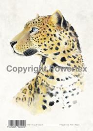 A4 Powerprint paper Leopard